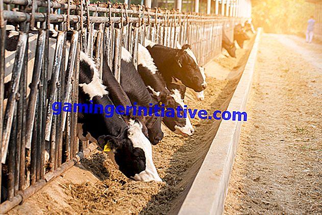 RimWorld: So füttern Sie Ihre Tiere