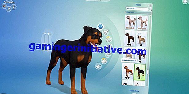 Les chats et les chiens des Sims 4: comment élever des animaux de compagnie